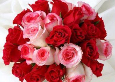 ورد أحمر رومانسي صور ورد وزهور Rose Flower Images