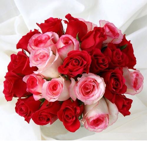 صور باقات ورد أحمر Red And White Roses Bouquet صور ورد وزهور