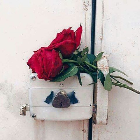 رمزيات ورد احمر رومانسي انستقرام جديدة 2017 - صور ورد وزهور Rose Flower images