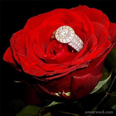 صور رمزيات ورود حمراء حب ورومانسية 2017 صور ورد وزهور Rose Flower