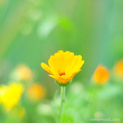 صور عرض ورد اصفر جميل صور ورد وزهور Rose Flower Images