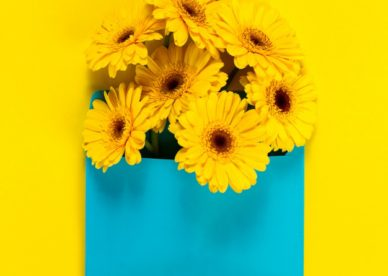 أحلى صور الورد Yellow Flowers On A Yellow Table With A Blue Board - صور ورد وزهور Rose Flower images