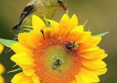 احلى واجمل ورد Sunflower - صور ورد وزهور Rose Flower images