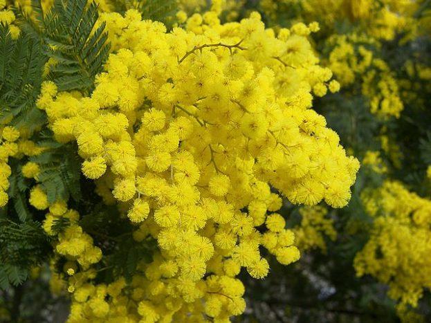 صور ورد أصفر طبيعي رومانسي صور ورد وزهور Rose Flower Images