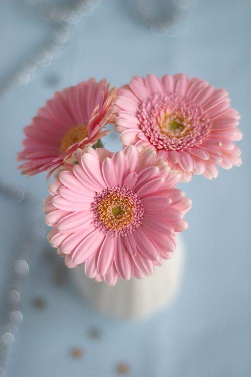 خلفيات ورد للايفون Flower 10