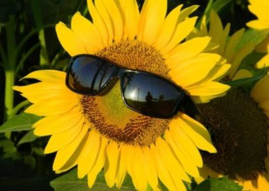 Best SunFlower Pictures - صور ورد وزهور Rose Flower images