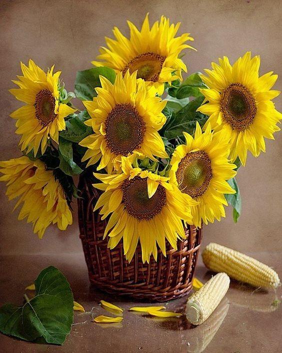 صور عباد الشمس للتصميم صور ورد وزهور Rose Flower Images