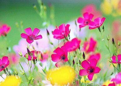 صور ورد طبيعي - صور ورد وزهور