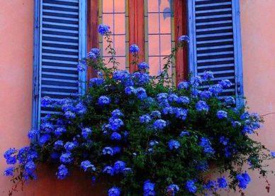 أجمل زهور البنفسج في العالم-صور ورد وزهور