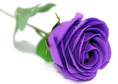 أجمل الصور لزهرة البنفسج-صور ورد وزهور
