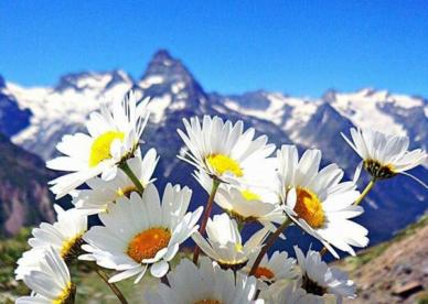 ورد طبيعي أبيض جميل 2018 - صور ورد