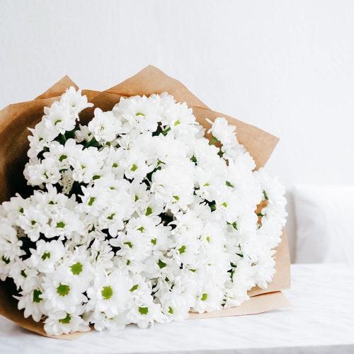 صور زهور وورود بيضاء جميلة - صور ورد
