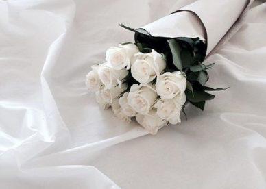 صور ورد وزهور بيضاء للواتس اب - صور رود وزهور