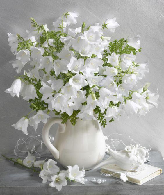 أجمل صور زهور بيضاء - صور ورد