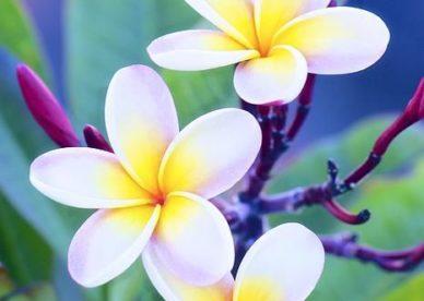 ورد ياسمين جميل للواتس اب والفيس بوك-صور ورد