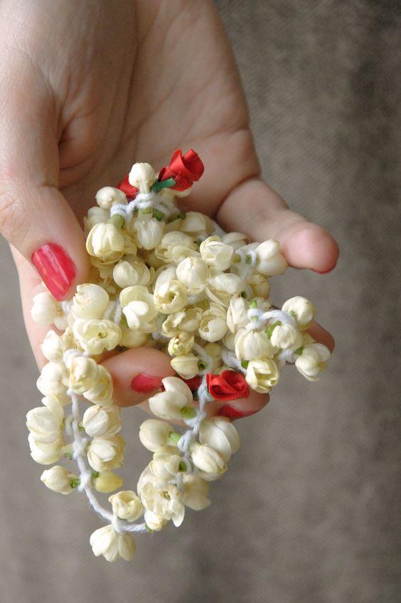 بستان ورد المصــــــــراوية - صفحة 6 Jasmine-flower-8