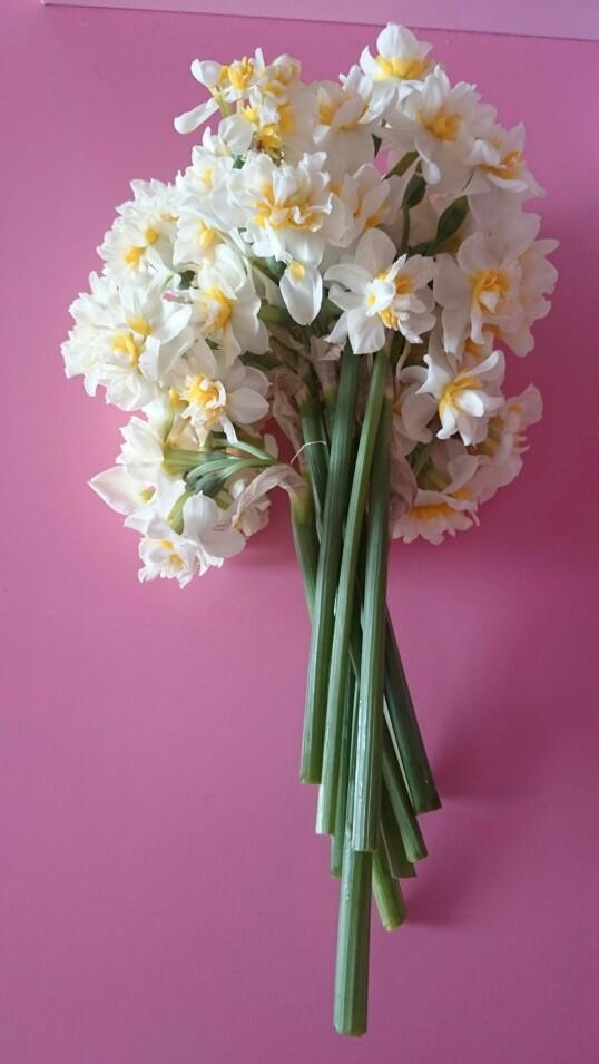 صور زهرة النرجس للواتس اب- صور ورد