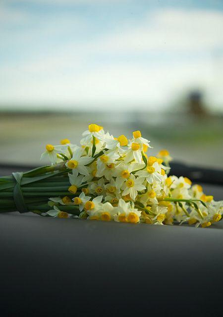أجمل صور زهور النرجس-صور ورد