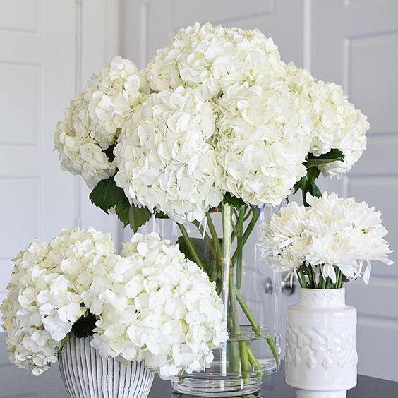 صور ورد طبيعي أحلى ورود بيضاء جميلة-صور ورد وزهور