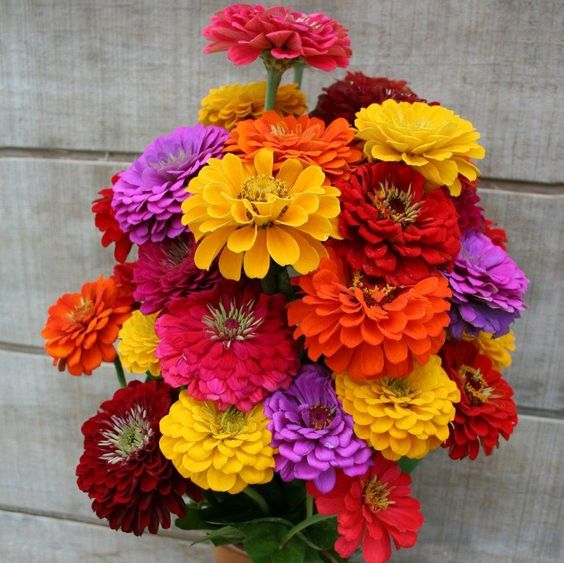 ورد زهور طبيعية حلوة-صور ورد وزهور