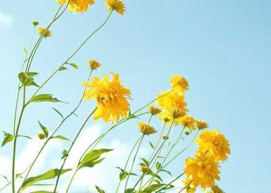 أحلى صور ورد طبيعي أصفر-صور ورد وزهور