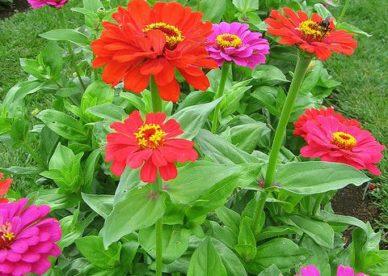 صور أزهار طبيعية جميلة ورائعة - صور ورد