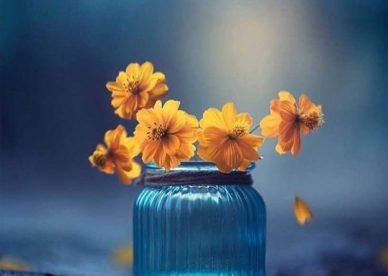 صور عن الورد - صور ورد