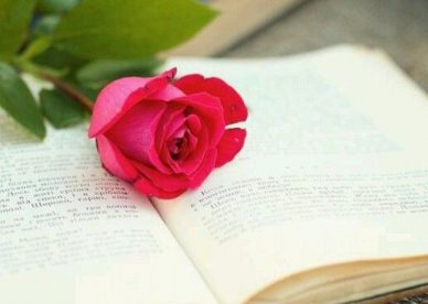 صور ورود الحب حمراء - صور ورد