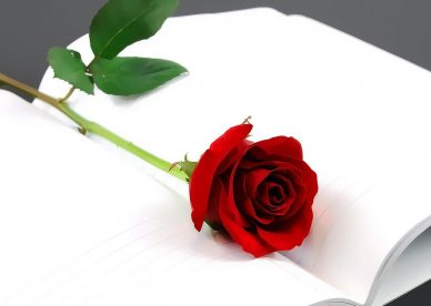 ورد أحمر جميل ورد الحب - صور ورد