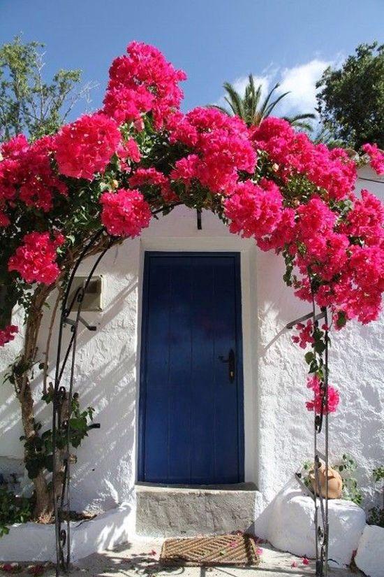 صور عن الزهور - صور ورد