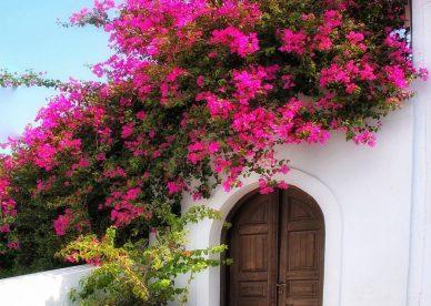 أجمل الصور للورود والزهور - صور ورد
