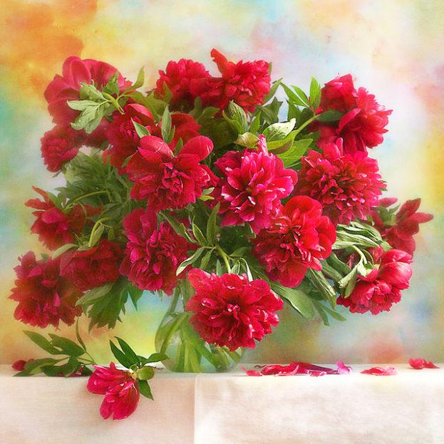 ورد أحمر جميل Red Flowers - صور ورد وزهور Rose Flower images
