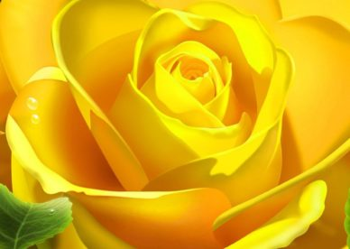 Top Ranked صور ورد وزهور Rose Flower Images