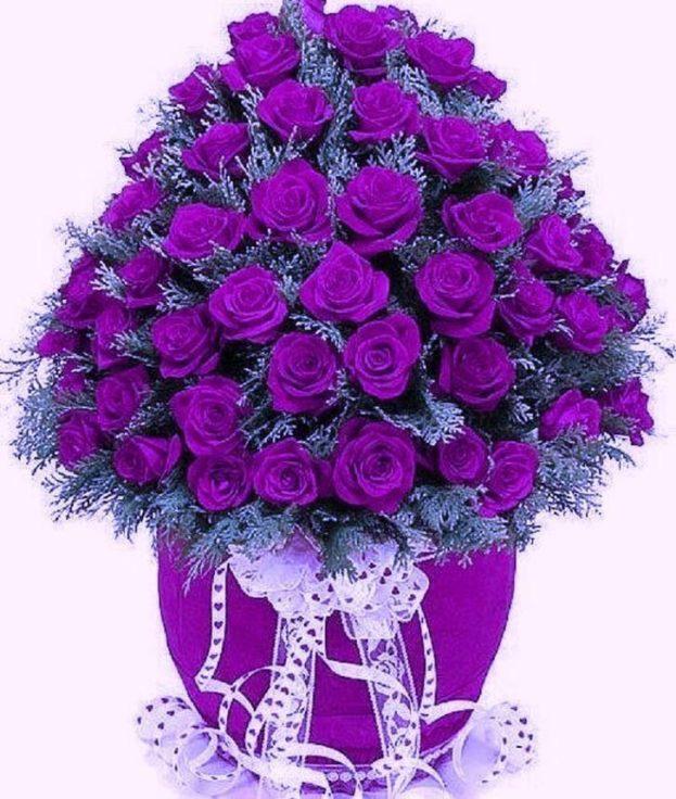 أحلى صور أزهار البنفسج-صور ورد وزهور