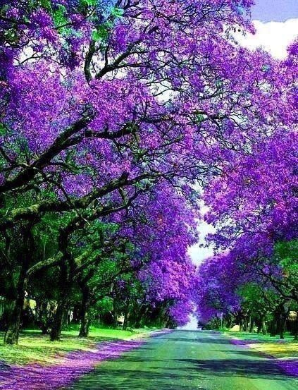 أجمل زهور البنفسج الطبيعية - صور ورد