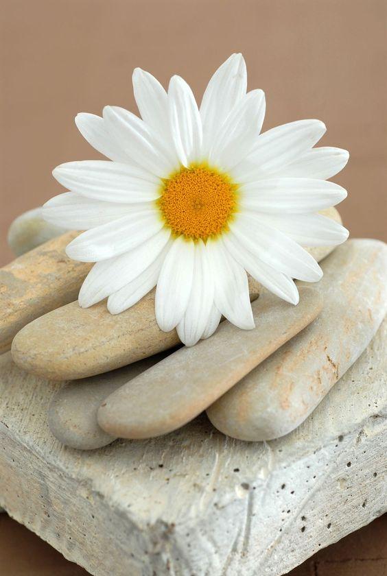 صور زهرة بيضاء حلوة - صور ورد