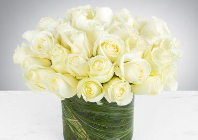 صور من الزهور البيضاء-صور ورد