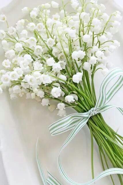 باقات ورد ابيض White rose bouquets 2018 - صور ورد