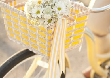 زهور جميلة بيضاء - صور ورد