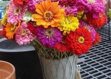 صور عن الورد الطبيعي - صور ورد