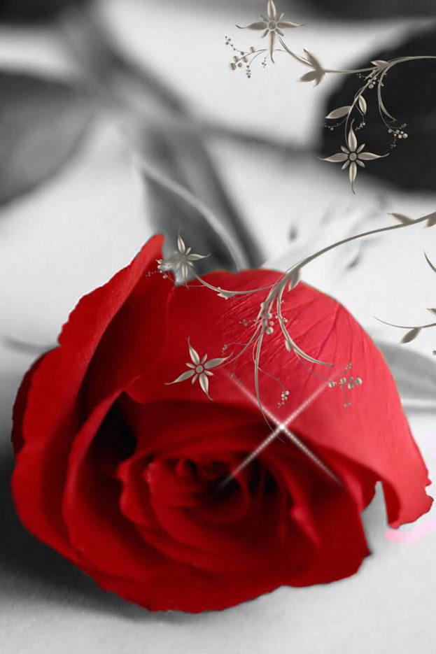 خلفيات ورد رومانسية - صور ورد