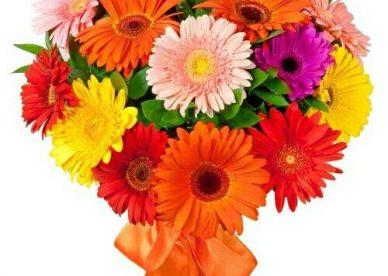 صور زهور متنوعة - صور ورد