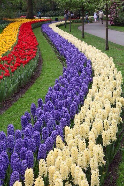 صور أزهار الربيع - صور ورد