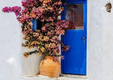 صور للزهور الجميلة - صور ورد
